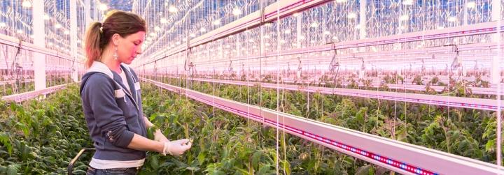 header-greenhouses-JAMI-960x335px